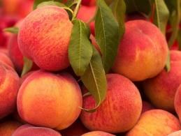 Honey Peach Ice Cream from Dorie Greenspan