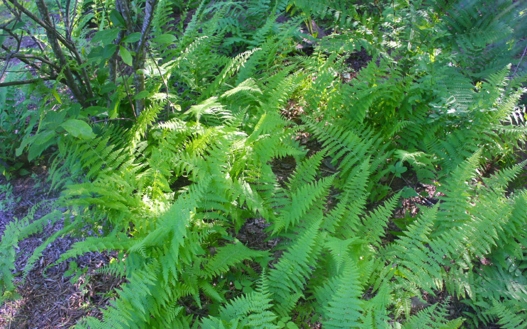 On Father's Day and Patience and Ferns
