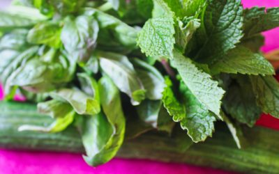 Cucumber, Mint and Basil Lemonade